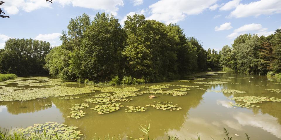 V-vormige vijver in het midden van de Brilschans