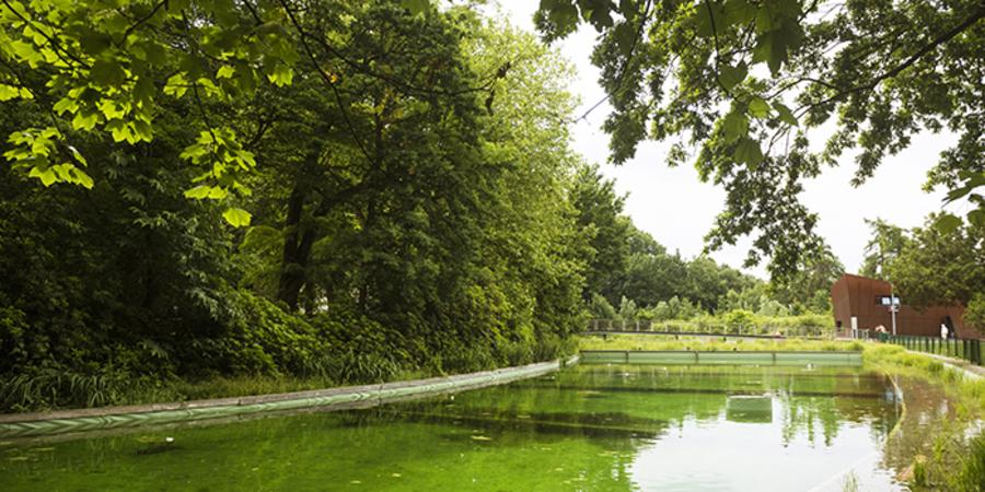 In het Boekenbergpark bevindt zich een zwemvijver