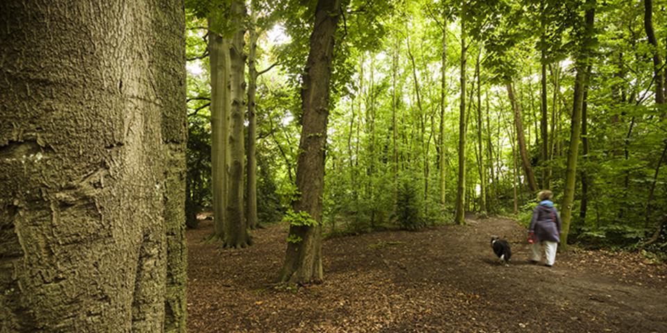 Een wild stukje bos aan de Singel